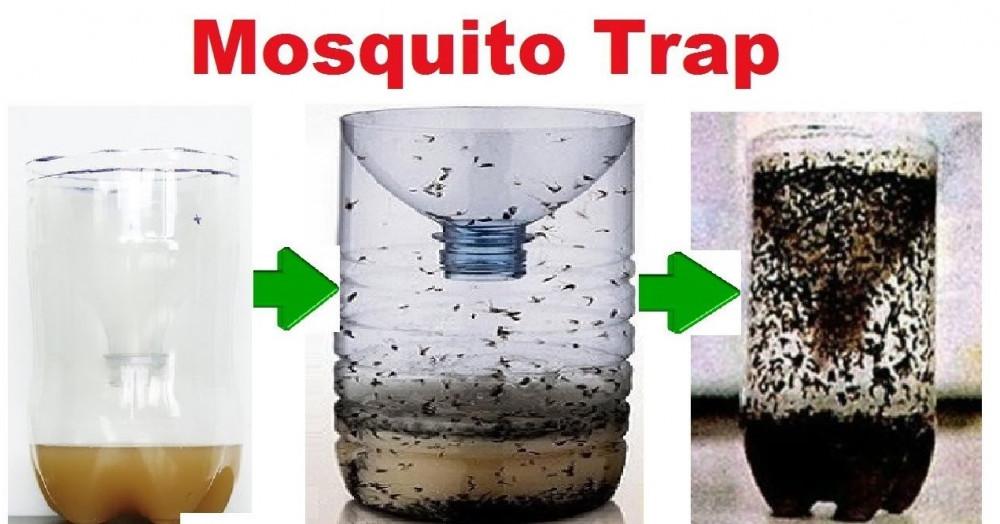 Home Made Mosquito Trap
