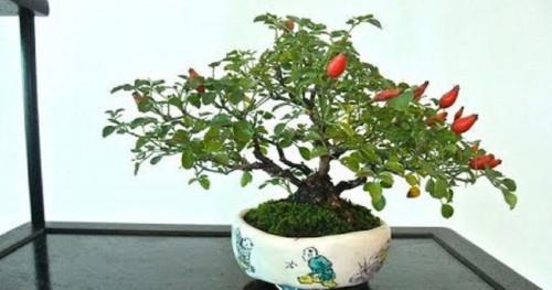 How do you make a pepper plant into a bonsai?
