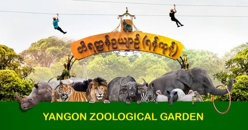 Lion, Elepnat, Bears and Pandas can be adopted From  Yangon Zoo