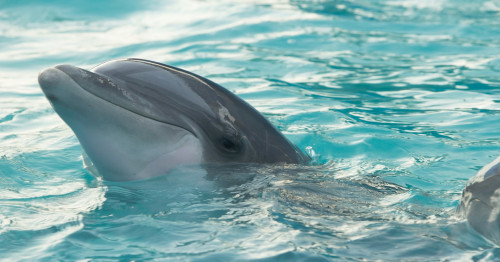 Discover endangered Irrawaddy dolphins with Expedia